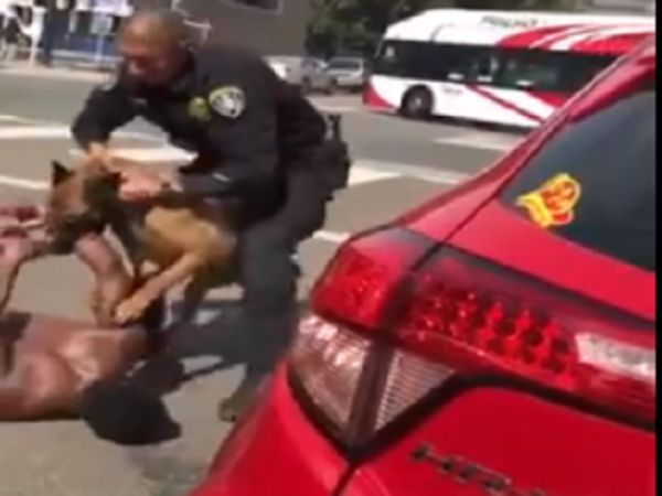 Police Dog Really Loves His Job. He Just Won't Let GO!