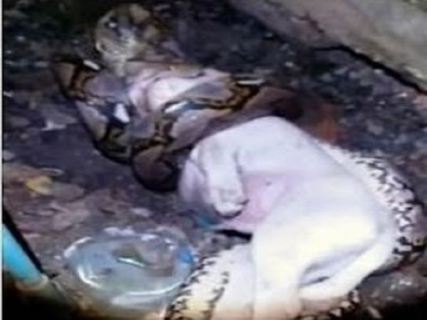 Owner Stumbles Upon Python Attacking Dog
