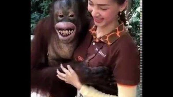 Orangutan Cops A Feel    (Video)