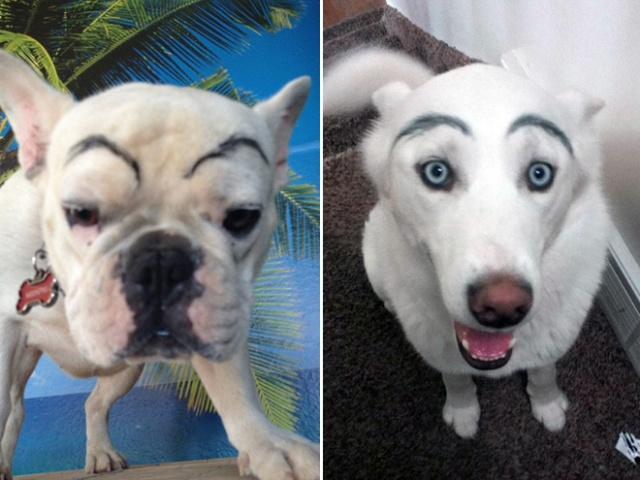 Dogs With Makeup Eyebrows (20 pics)