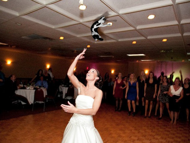 Bridal Bouquets Replaced With Cats (20 pics)