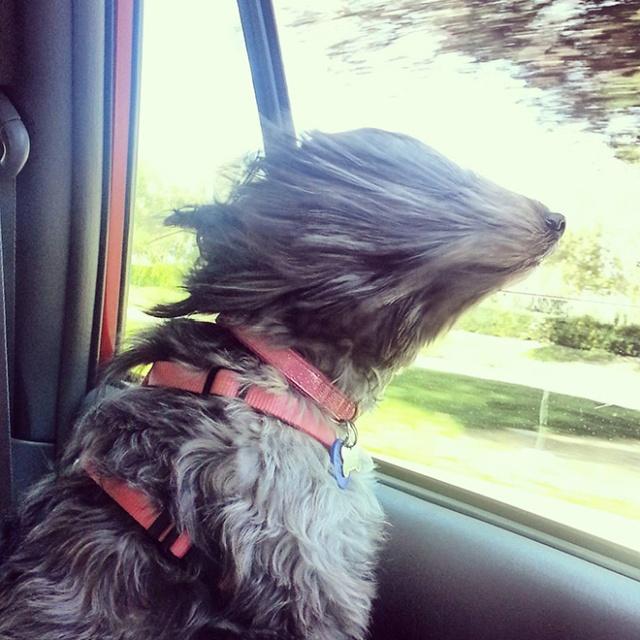 Dogs vs Wind (19 pics)