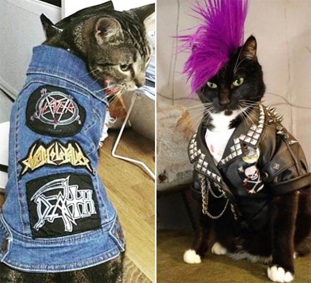 Cats Wearing Metal Battle Vests (20 pics)