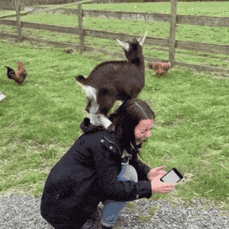 Parkour Goats (18 gifs)