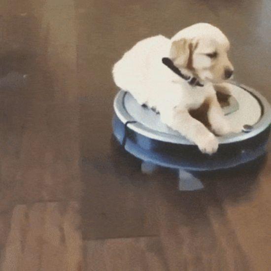 Dog GIFs (15 gifs)
