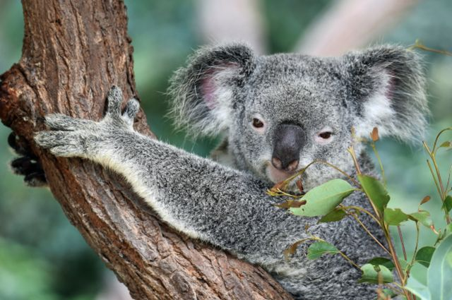 The Ridiculous Stereotypes About Australia That Everyone Has Heard At Least Once