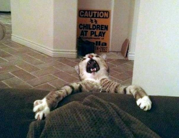 Funny Pictures Of Cats (30 pics)