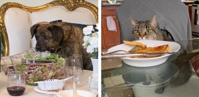 Pets Staring At Food (32 pics)