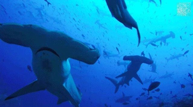 Sea Creatures (14 gifs)