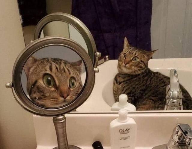 Hilarious Cats (33 pics)