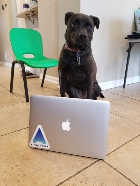 When Pets Help You To Work From Home (24 pics)