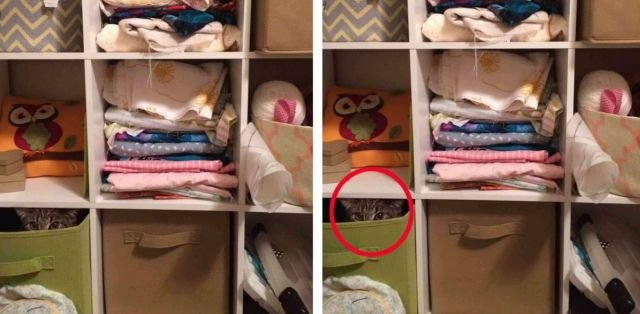 Find The Cat (34 pics)
