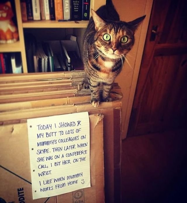 Shame On These Pets (29 pics)