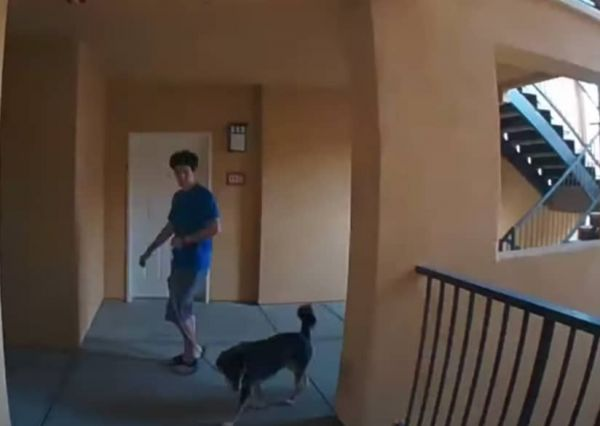 Worst Package Thief Ever  (Video)