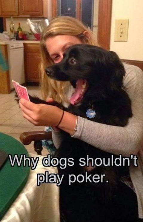 The Best Gambling Memes Ever