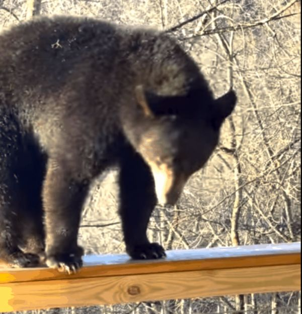 Lessons From A Bear On How To Enjoy Life (Video)