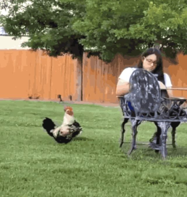 Wins And Fails (35 gifs)