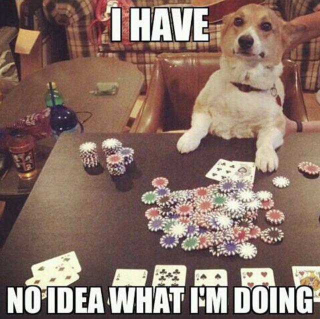 Funny casino memes